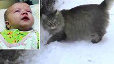 氷点下のロシアで置き去りの赤ん坊を救った野良猫