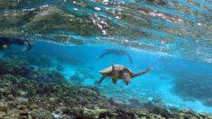 気候変動による海の酸性化、サンゴ礁のリスクに=研究