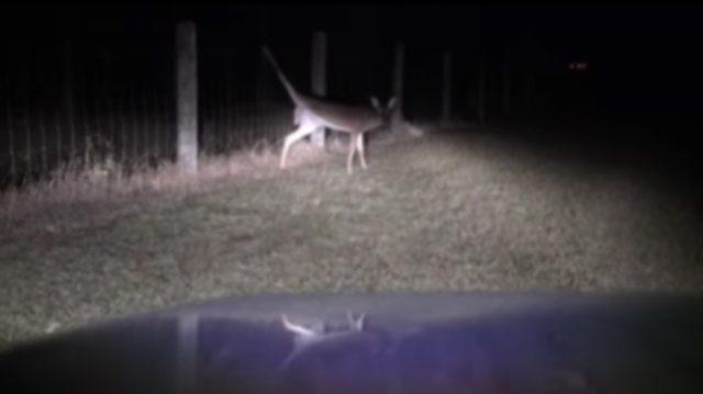 動けなくなった鹿を救ったハンター