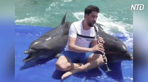 すてき! 音楽を堪能するイルカとゾウ