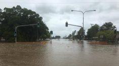 オーストラリアで洪水被害の町にワニ出現