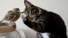 小鳥が気になるニャンコ