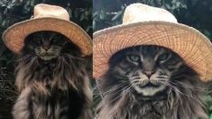 帽子がとても似合うねこちゃん