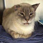 乱暴で怒りっぽかった猫が、手術後に大きな変化が!