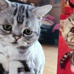 世界一悲しい目をした猫