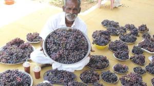 50kgものブドウを集めた男性の目的とは?