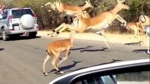動物たちのせいで仕事に遅れるよー!