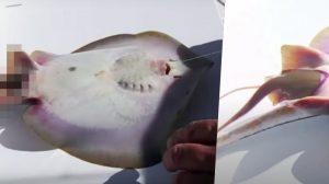 釣った魚はなんと分娩中? 魚のお産を手伝った奇跡的瞬間!