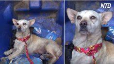 飼い主に捨てられ、子犬を盗まれた母犬と残された1匹の子犬を救出