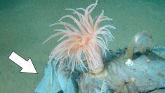深海1万メートルにプラごみ汚染 使い捨て製品、生態系懸念