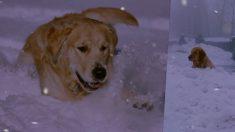 【ストーリー動画】雪の中で倒れた飼い主を温め、吠え続けた犬