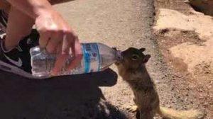 【激カワ】のどの渇きのあまり、ペットボトルの水をゴクゴク飲むリッス
