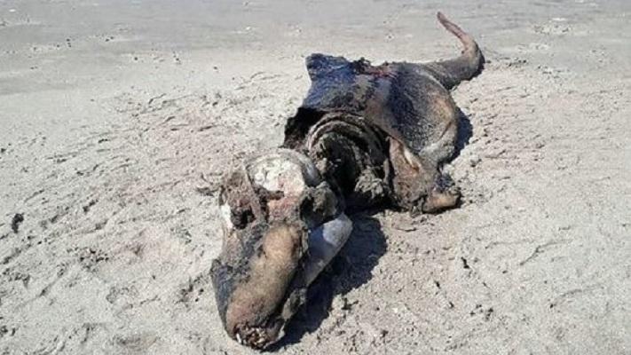 恐竜の死骸か?「専門家を悩ます」英海岸の「謎の生物」