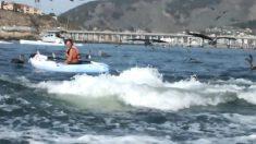 【動画】海上のカヤックでリラックス中の女性に、サプライズゲスト