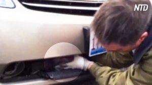 【動画】アクシデント! 運転中の車のフロントグリル内にマガモが浸入