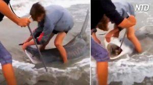 【アニマルレスキュー】釣り針を飲み込んだサメ 勇敢な漁師たちが救護