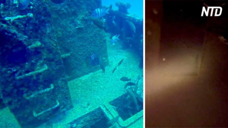 【ダイビング】沈没船内を探検中 サメと遭遇