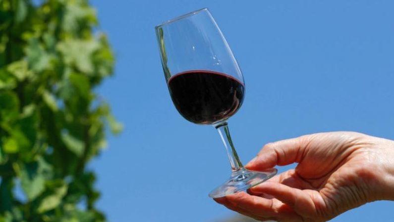 気候変動で欧州北部のワイン生産急増、ベルギーは10年で4倍に
