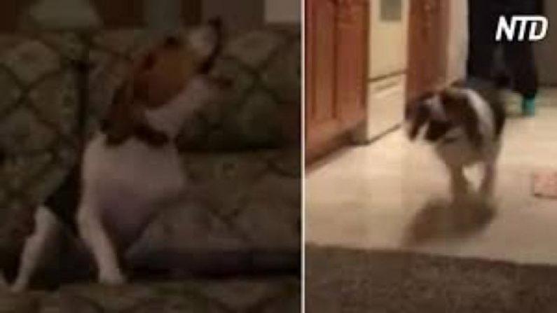 【ペット】ご主人さま帰宅時の歓迎ぶりがちょっとやりすぎの犬