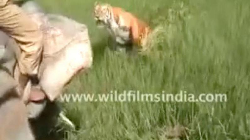 【驚愕】トラを保護区に放しに行ったレンジャー、噛みつかれ指を失う