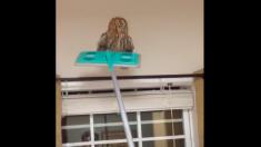【不法侵入】帰宅すると室内にフクロウが! お帰りに頂くまでの一部始終