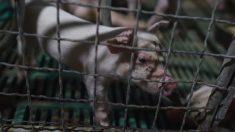 アフリカ豚コレラウイルス検出、中国から持ち帰った食品=韓国