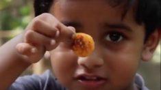 【料理】5歳の少年料理人が教える『エビのカレー粉炒めパクチーがけ』