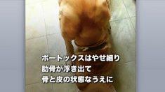 【動物虐待】愛情を知らない奇形の犬 優しい女性にめぐり会うも難病に
