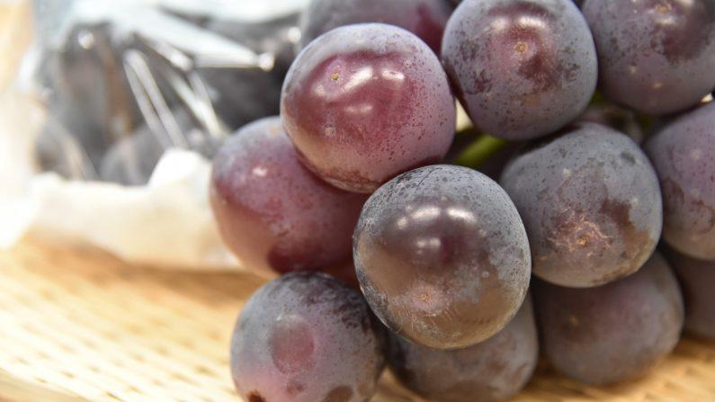【おいしいブドウの選び方】ズバリ「白い粉」をふいているのが上物!