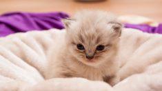 【プリンセス】深窓のお嬢様ネコの姿に驚嘆の声