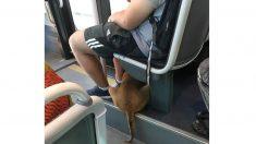 バスが人間臭いってどういうこと?住みやすい(はずの)フランスの街リヨン