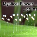 【予兆?】三千年に一度しか咲かない花の目撃報告があいつぐ