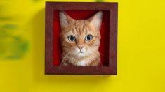 【芸術】猫の100%再現する「ニードルフェルティング」の技法に驚愕する