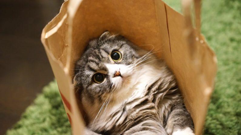 猫「(助けて・・・)」控えめに助けを求めてくる姿が可愛いと話題に