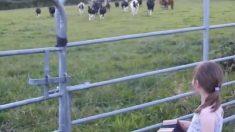 【聖金曜日の奇跡】少女のアコーディオンが牛たちを覚醒させるとき‥‥