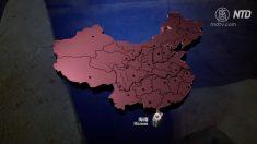 【動画ニュース】中国全ての省でアフリカ豚コレラ確認 今年下半期は豚肉価格高騰が予想