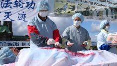 中国で臓器狩りの嵐吹き荒れる 父親を殺された女性が新天地アメリカへ