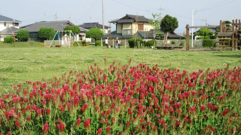【散歩道で見た花や風景】ストロベリーキャンドル