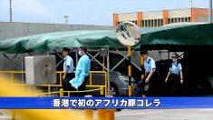 【動画ニュース】香港で初のアフリカ豚コレラ 感染豚は中国から