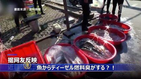 【動画ニュース】「魚からディーゼル燃料臭がする」中国メディアの理由に民衆は「うそだ」