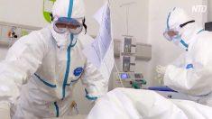 「ウイルスは野生動物由来ではない」大紀元が調査報告を発表