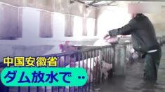 安徽省でダム300基が放水 下流の村が水没