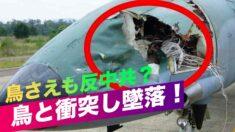 「鳥さえも反中共?」中共戦闘機が鳥と衝突し墜落