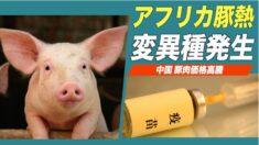中国でアフリカ豚熱変異種が発生