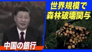 中国の銀行が世界規模で森林破壊に関与