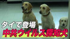 タイで中共ウイルス探知犬登場