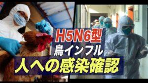中国広東省 H5N6型鳥インフル人への感染がを確認